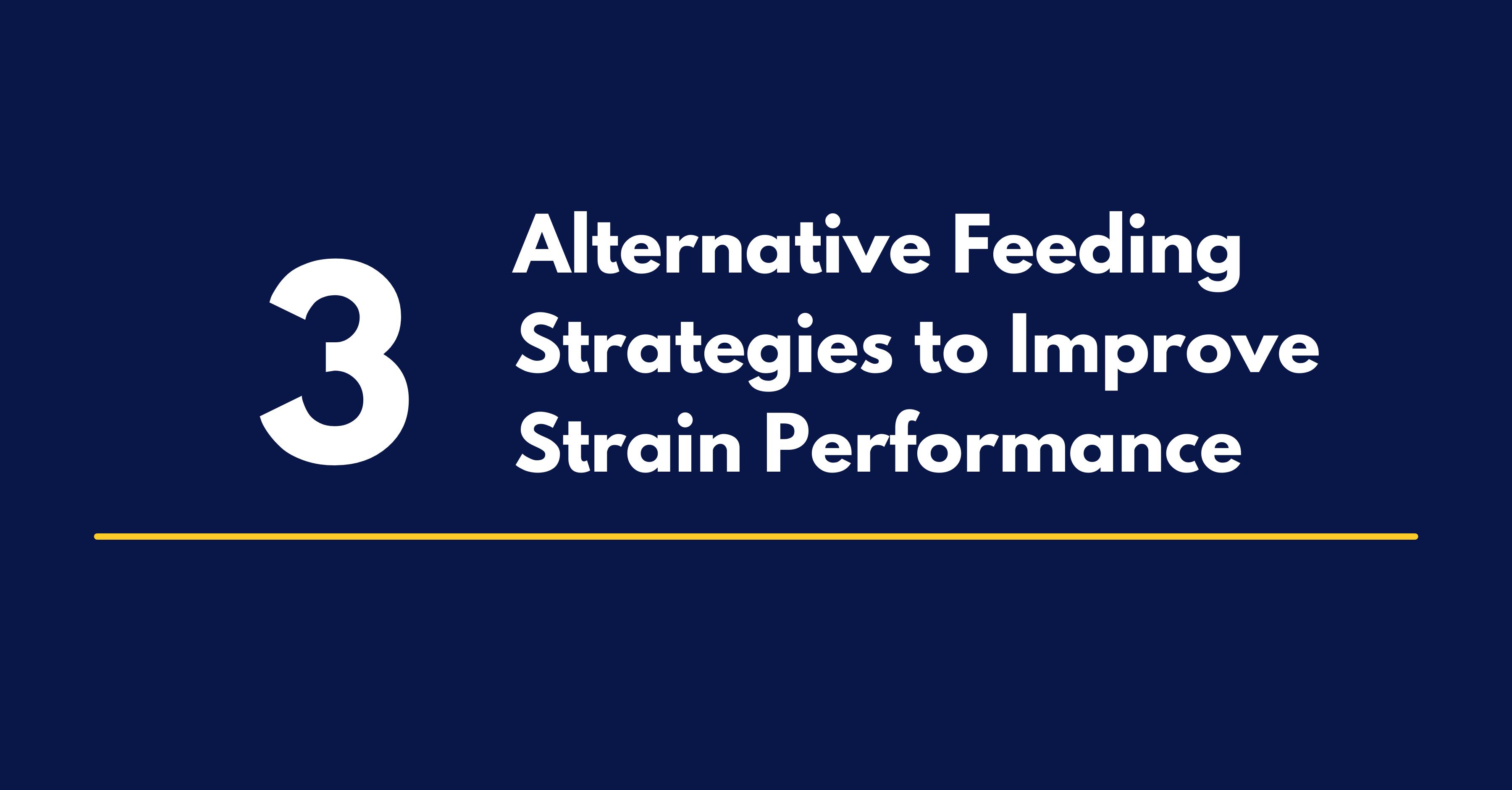 3 Alternative Feeding Strategies to Improve Strain Performance